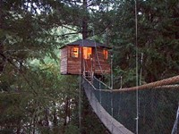 Go Here: Treehouse Resorts