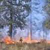 Prescribed Burn near Horse Butte