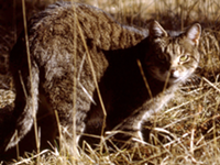 The many problems caused by free roaming and feral cats