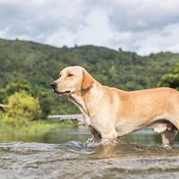 Is Rover a River Protector?