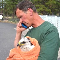 Baby Eagle Rescued