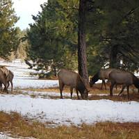 Landowners Help Conserve Wildlife Habitat