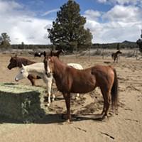 83 Horses Taken from Terrebonne