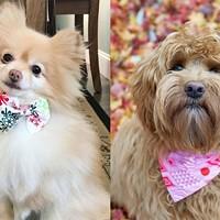 Dog Pack Collars