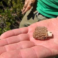 Get Your Mushroom Permit