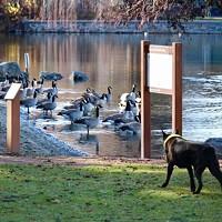 Keeping Geese at Bay