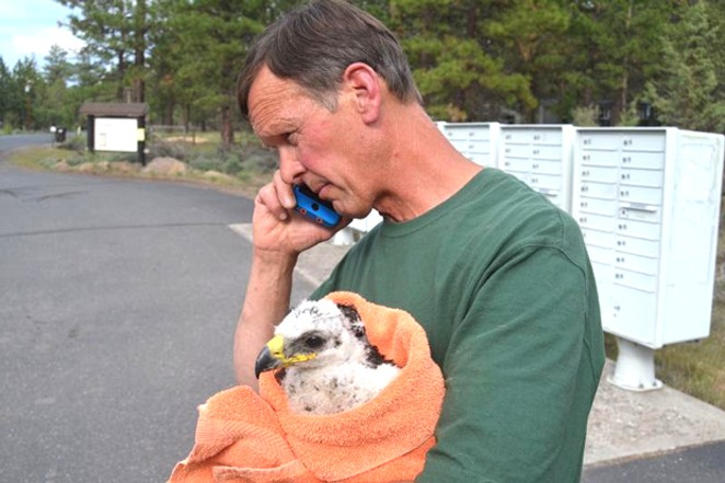 Gary Landers takes rescued eaglet Whychus to his rehab facilities. - JIM HAMMOND