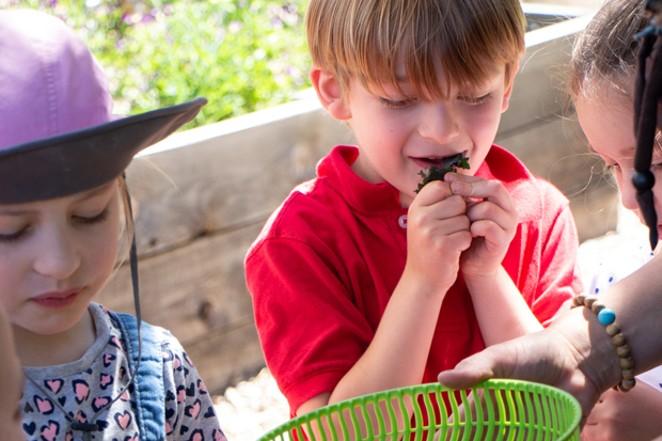 Jaxon Barrett tries kale from the Kansas Avenue Learning Garden during a field trip to The Environmental Center. - KEELY DAMARA