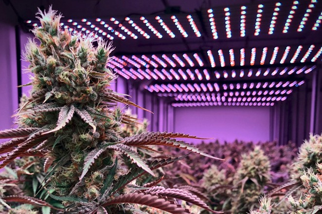 Whether Oregon has an oversupply of cannibis depends on who you talk to. - PIXABAY