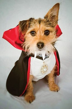 Honorable mention: Rusty as Count Dracula. - SUBMITTED