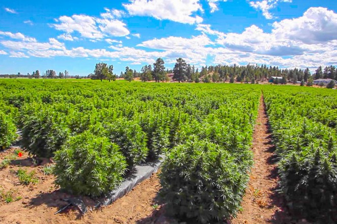 Triple C Farms, 100 acres, Sisters - GREG MORING