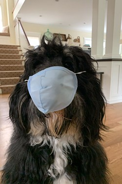 Pablo, Pamela Morgan's pup, has been practicing mask-wearing in anticipation for the McKay 
