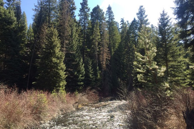 Shevlin Park, which is managed by Bend Park and Recreation District, was never closed during the first wave of coronavirus lockdowns in Central Oregon. Last weekend, the trails were crowded with both locals and visitors. - LAUREL BRAUNS