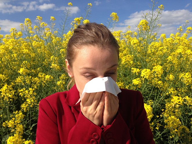 Seasonal allergies are a real pain, but they can be effectively combatted with a little attention to digestive health. - PIXABAY