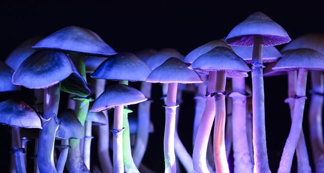 2020's Oregon Psilocybin Therapy Ballot Measure would make it legal for therapists to offer the psilocybin experience in licensed clinics by trained therapists. - PIXABAY