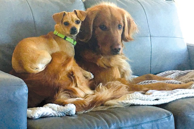 Bailey & Annie, runners-up for Worst at Social Distancing. - SUBMITTED