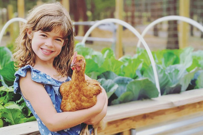 """""""We raised layers and meat chickens to sell for friends and family. #GreenFarmerHomestead,"""" said Kirsten Green Farmer. - SUBMITTED"""