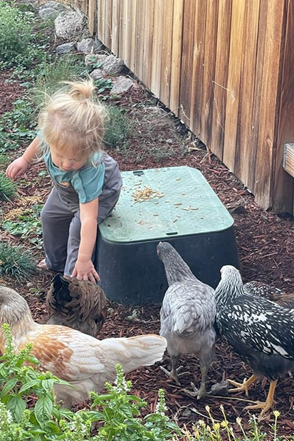 """""""My girl is petting Dot. Dot was the tiniest little chick and it just suited her so well. The others are,  Lacy, Blue, and Stevie Chicks,"""" said chicken mom Emily Mattison. - SUBMITTED"""