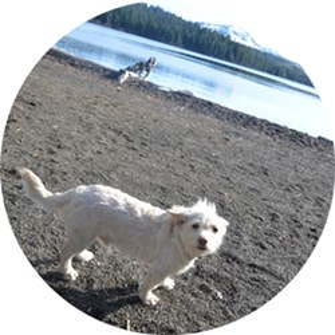 Yoda enjoying the beach at Suttle Lodge. - NICOLE VULCAN