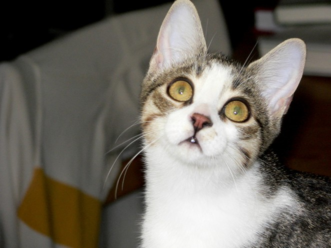 Are you confused like this cat? Yeah, us too. - SLAVA