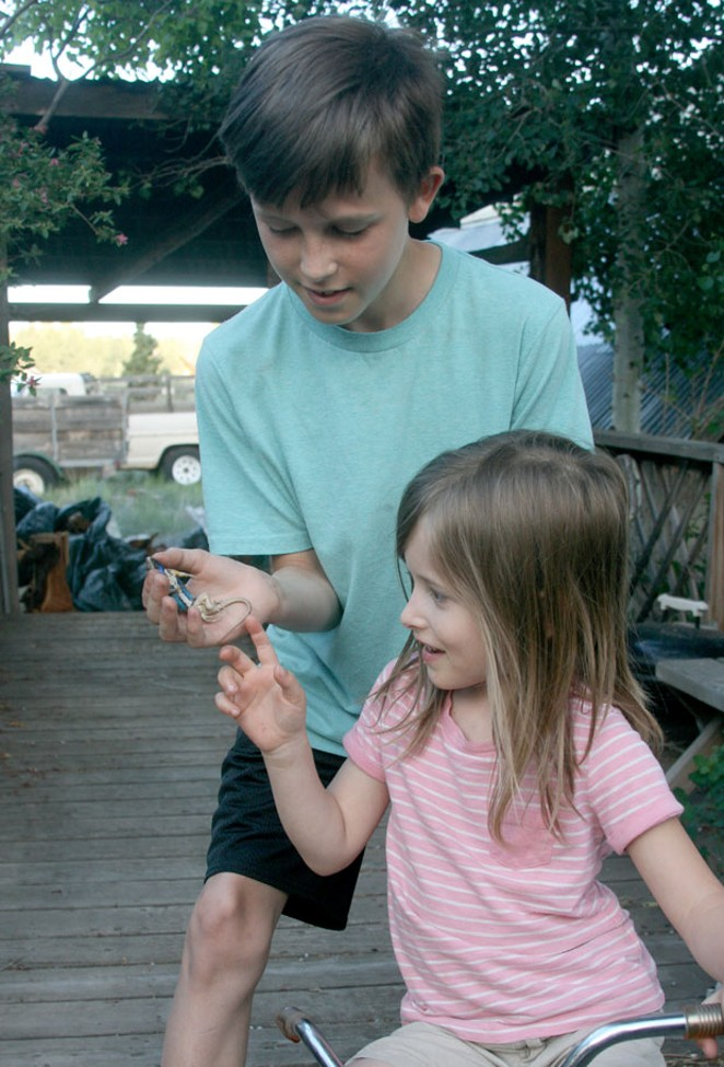 Grandkids Daxon and Jane show off the beautiful male fence lizard Daxon found. Inset, fledgling American Kestrel with a mouth full of delicious fence lizard. - JIM ANDERSON