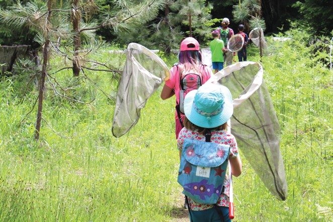 Land Trust Butterfly Walk - SUBMITTED