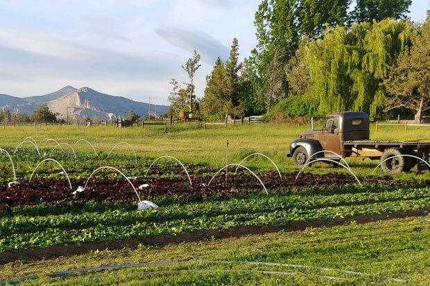 Rooper Ranch specializes in heirloom tomatoes. - SUBMITTED