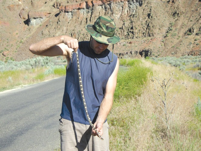 "Snake on a ""Plain!"" A long-nosed snake is verified in Oregon. - ALISON DAVIS RABOSKY"