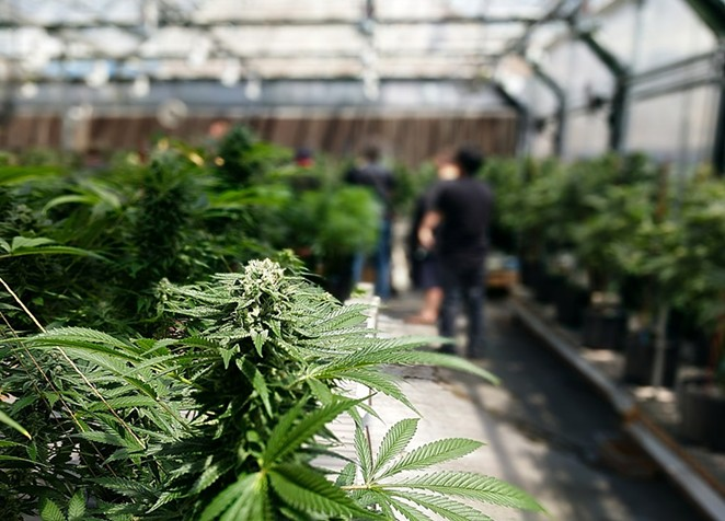 Deschutes County regulations require growers to grow marijuana indoors, along with a number of other regulations that some say are the strictest in the state. - WIKIMEDIA COMMONS