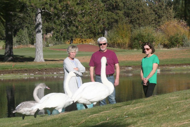 It may not look that way, but Pam Oliver, who's standing closest to Sydney the cygnet, Tim Ross, who's giving momma swan, Eloise, the eye, and Robin Gold, at right, are all good friends. - JIM ANDERSON