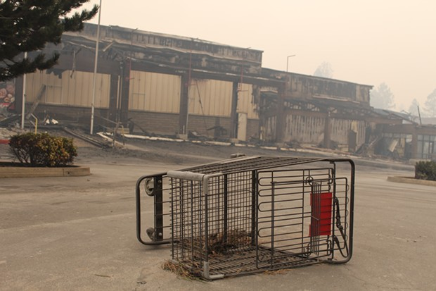 An abandoned shopping cart sits outside a Safeway store in Paradise, Calif. - MEREDITH J. COOPER, CHICO NEWS & REVIEW