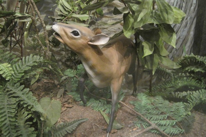 The charming Mouse Deer recreated in a landscape suitable for omnivorous browsing. - NATIONAL PARKS SERVICE, NORRIS PETERSON AND SUE EVANS-OLSON