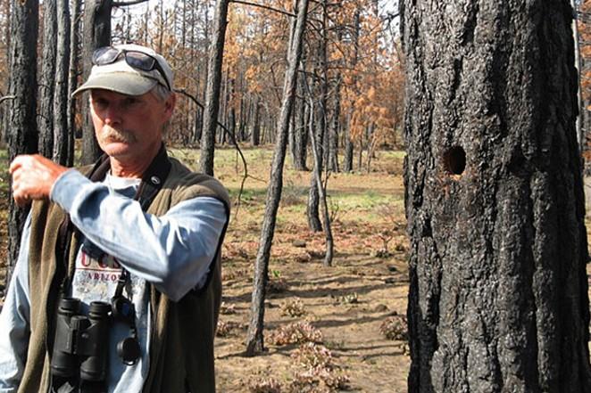 Lewis' woodpecker.Dean Hale doin' what he loved best, watching woodpeckers. - ANNETTE SMITH