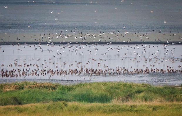 Birds of Lake Abert (and the fun of getting there)