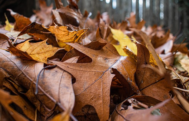 Put the Leaves to Work in Your Yard