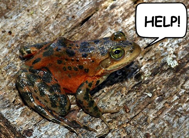 boot_frog.jpg