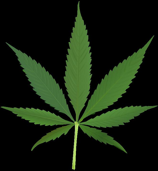 1000px-cannabis_leaf_2.jpg.png