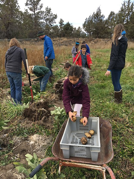 Third graders at the Waldorf School of Bend harvest the school's garden crop. - WALDORF SCHOOL OF BEND