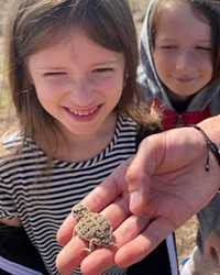 Jane and Graham Anderson looking over a Pygmy horned lizard.