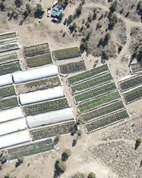 Over 49 greenhouses containing over 9,000 marijuana plants at various growth stages, over 2,800 pounds of processed marijuana and three firearms were confiscated from a cartel-operated farm in Alfalfa, according to the Deschutes County Sheriff's Office.