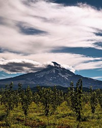Check out this picturesque view of Mt. Hood! @cazztr0 shared this shot with us while picking fruit near the mountain. I'm sure the fruit were just as sweet as the views. Share your photos with us and tag us @sourceweekly for a chance to be featured here and as the Instagram of the week in the Cascades Reader. Winners get a free print from @highdesertframeworks