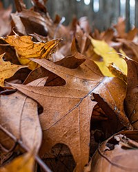 Save time, money and critical pollinators by leaving leaves alone.