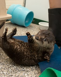 Name that otter pup!