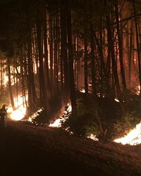 A firefighter examines the night back burn off of I-84 west of Cascade Locks.
