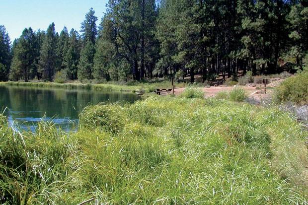Meadow Camp along the Deschutes river, circa 2002. - KOLLEEN MILLER