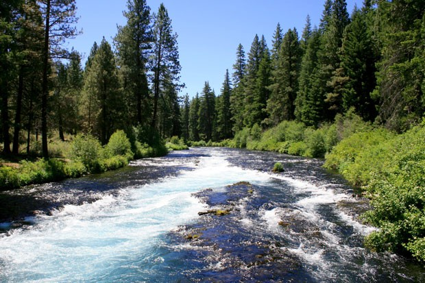 A view of the Metolius River just below Wizard Falls Fish Hatchery. - WIKIMEDIA COMMONS