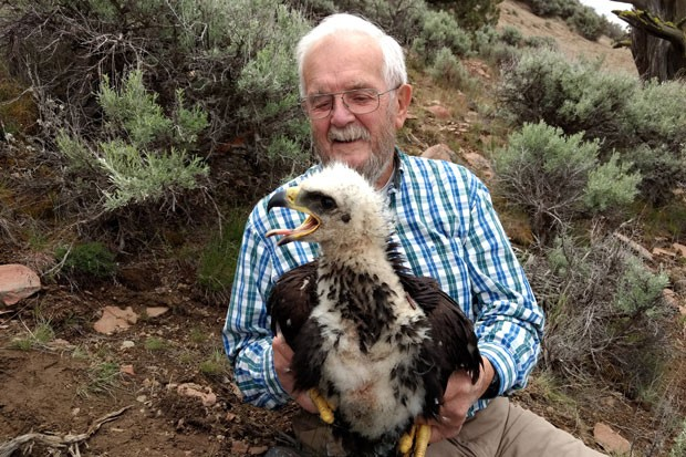 Jim Anderson holds a baby golden eagle in the Diablo Mountain Wilderness Study Area. - SUE ANDERSON
