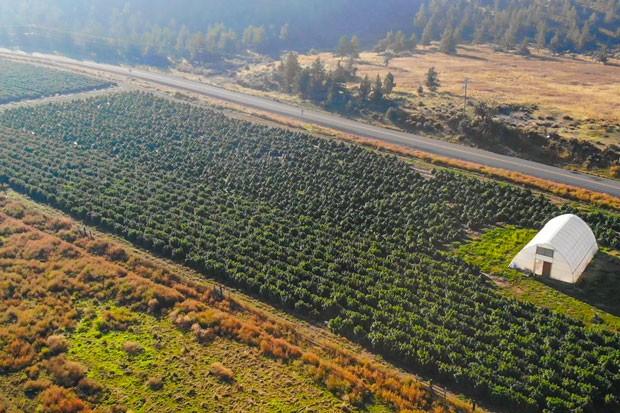 O'Neil Farms, 7 acres, Terrebonne - GREG MORING