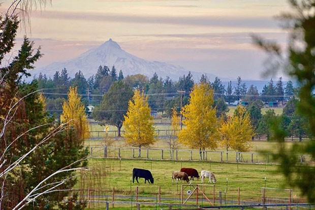 This pastoral setting provides the backdrop for a songwriters camp. - RARELOOM FARMS