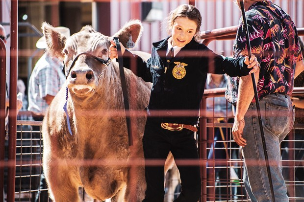 Phoenyx and Olivia entering the auction ring one last time at the 2019 Deschutes County Fair and Youth Livestock Auction. - HALLIE UTTER PHOTOGRAPHY